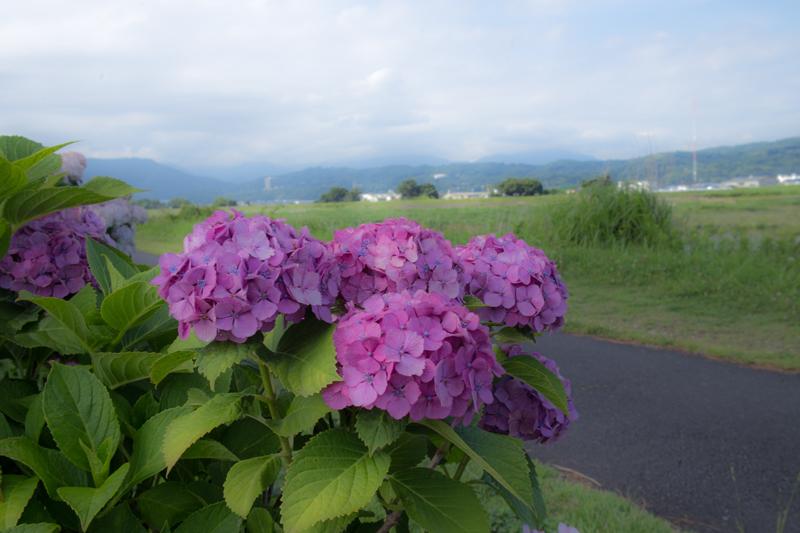 2018-06-17 酒匂川~富士見塚~渋沢丘陵他018.jpg