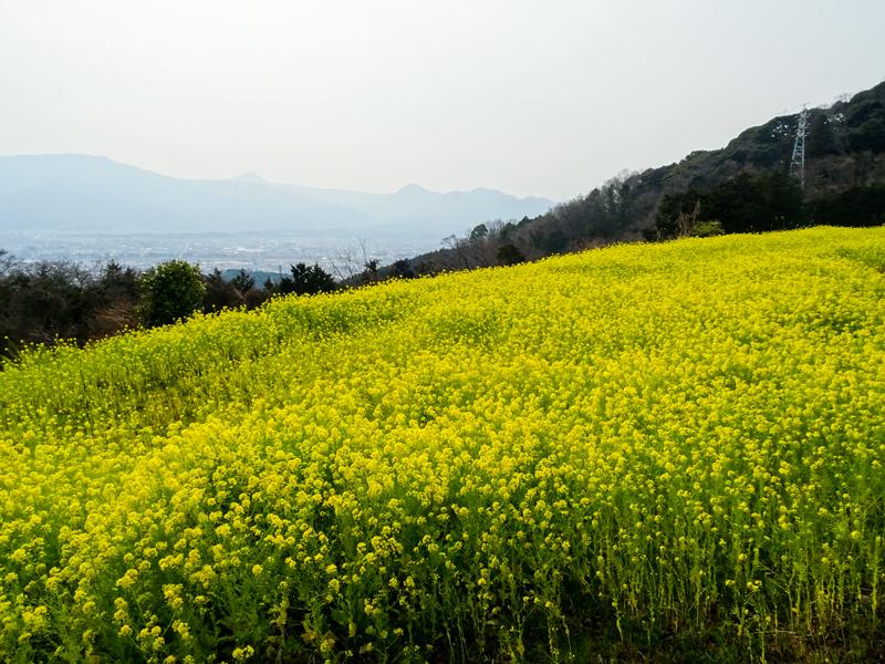 昨年の富士見塚.jpg