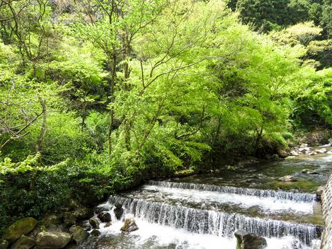 170423 椿ライン~芦ノ湖009.jpg
