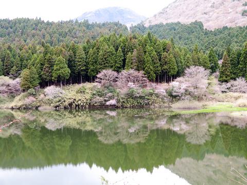 170423 椿ライン~芦ノ湖027.jpg