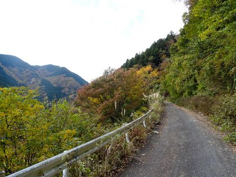171112 三廻部~秦野峠028.jpg