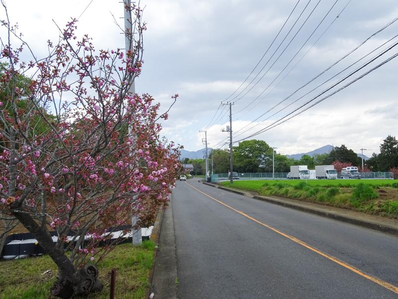 2018-04-08 渋沢丘陵など006.jpg
