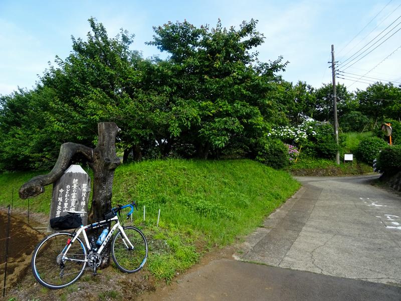 2018-06-17 酒匂川~富士見塚~渋沢丘陵他009.jpg
