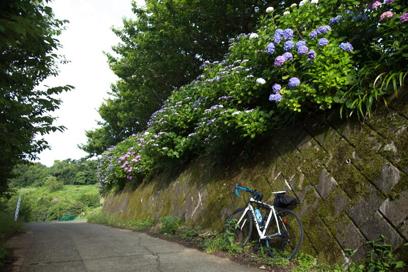 2018-06-17 酒匂川~富士見塚~渋沢丘陵他023.jpg