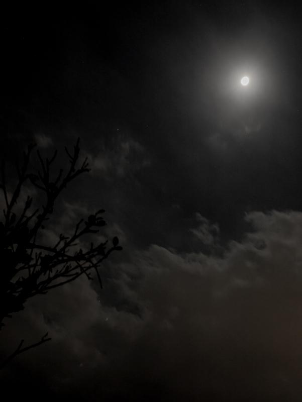2019-02-夜空-003.jpg