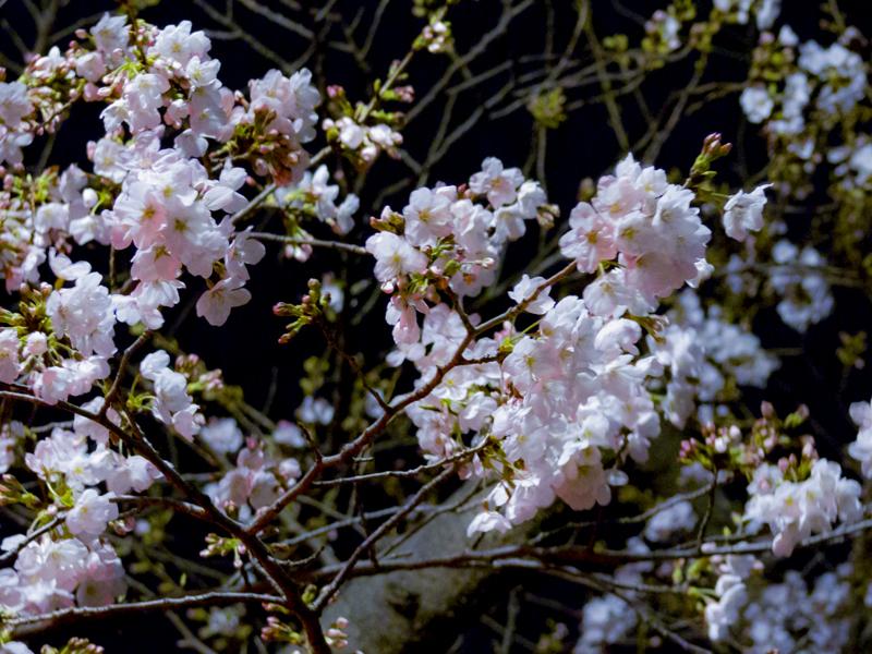 2019-03-kashiogawa-000.jpg
