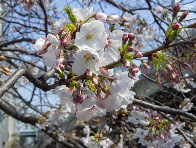 2019-03-nihonbashi-001.jpg