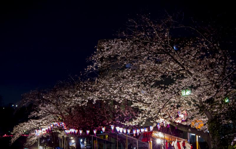 2019-04-oookagawa-sakura-011.jpg