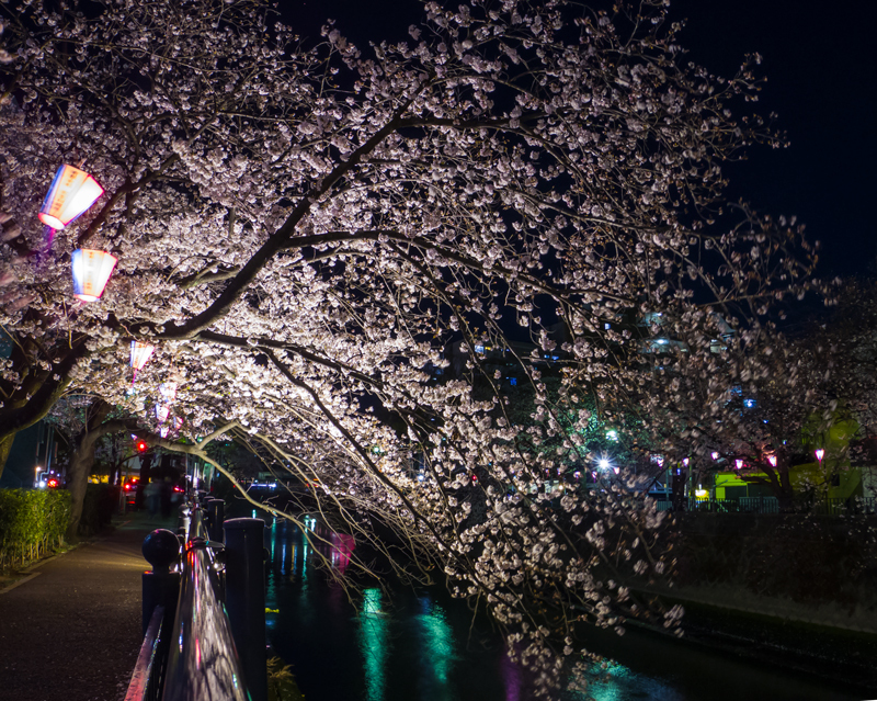 2019-04-oookagawa-sakura005-12.jpg