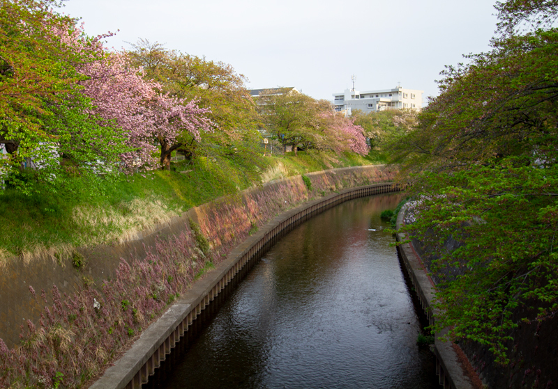 201904-mekujirigawa-027.jpg