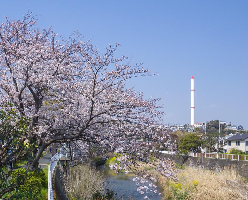 201904hikichigawa-000.jpg