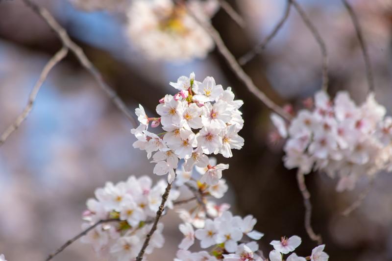 201904hikichigawa-015.jpg