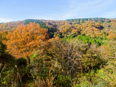 DSC161120明神峠~山中湖0025.jpg