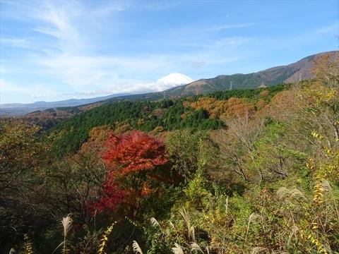DSC161120明神峠~山中湖0029.JPG